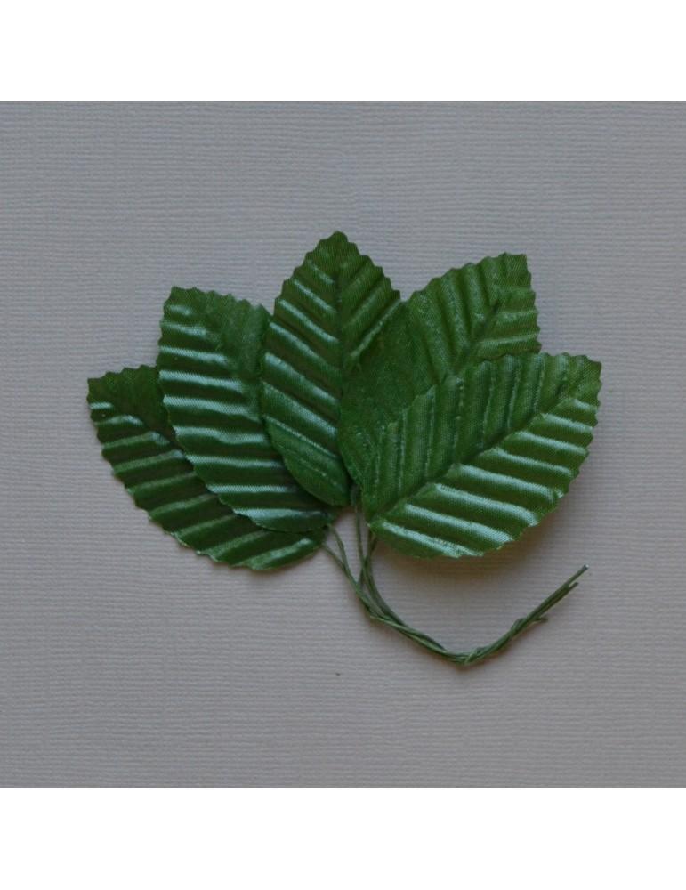lot de 5 feuilles verte