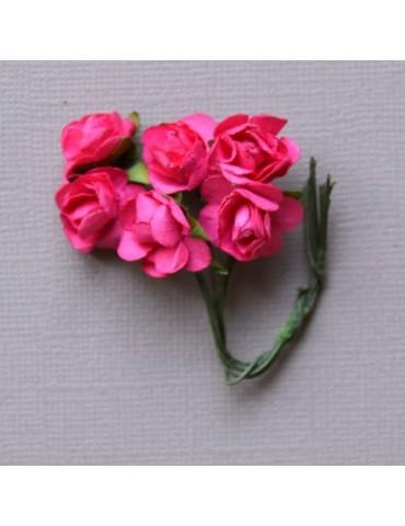 6 minis roses fushia