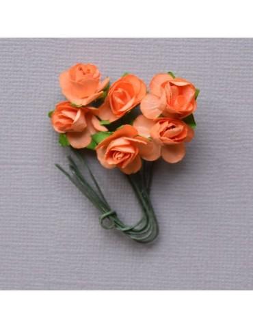 6 minis roses orange