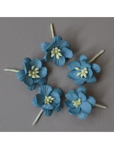 5 fleurs de cerisier bleu
